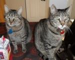Petit clin d'oeil à nos chats…