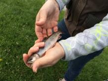 Pêche urbaine
