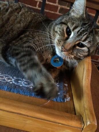 chats-du-542 (19)