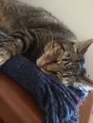chats-du-542 (26)