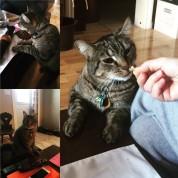 chats-du-542 (33)